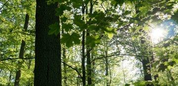Hangelwald Impressionen